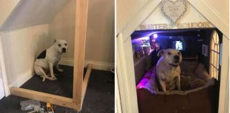 Owner Builds Dog With Trust Issues His Own Little Bedroom