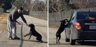 abandon dog