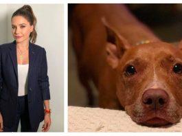 Sophia Bush Shared Heartfelt Tribute After The Death Of Her Beloved Rescue Dog