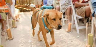 Ways People Celebrated Their Pets On Their Wedding Day