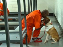 Prisoners share their cells with a dog and it has a magical effect