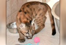 Adopted Kitten
