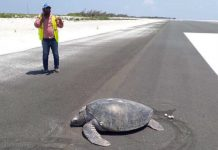 Turtles Goes Home