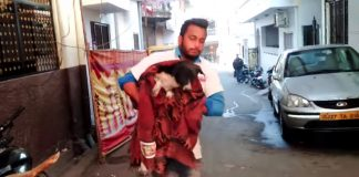 Stray Dog Lay Whimpering In The Streets Wishing For A Better Life