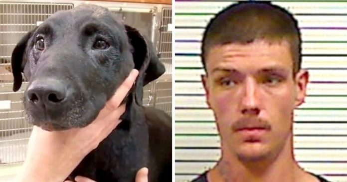 Dog Dies After Being Beaten With Hammer & Set On Fire, Her Family Demands Justice