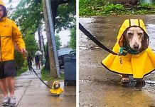20 People Who Went the Extra Mile for Their Pets PAWS PLANET