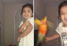 Girl trains pet bird to attack whoever she wants and isn't afraid to use her powers