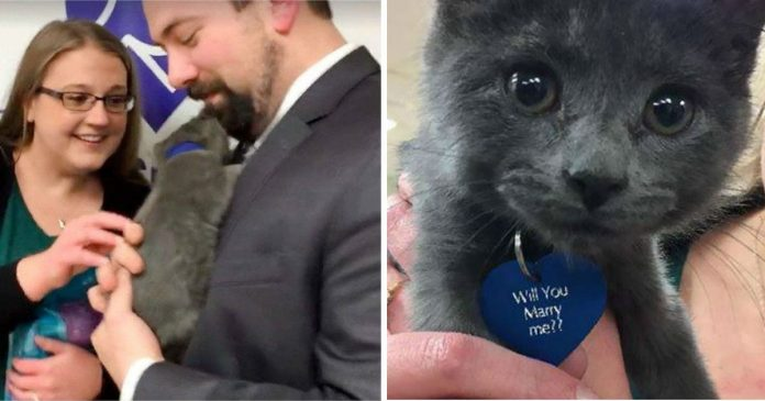 Adorable Rescue Kitten Helps Man Propose To His Girlfriend, And It Can't Get Any Cuter PAWS PLANET