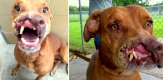 Family Dumps Their 'Ugly' Dog, Doctors Transform Him With Life-Altering Surgery