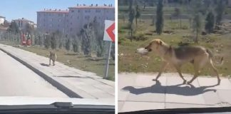 Man Sees Stray Dog Carrying Bowl Of Food And Decides To Follow Her PAWS PLANET