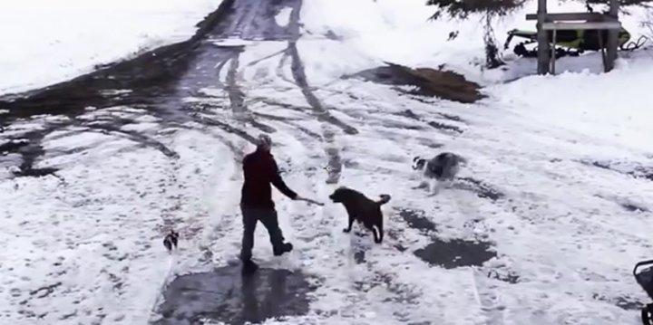 Hero Dog Leapt
