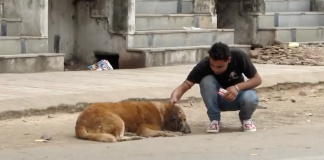 All It Took for This Injured Dog Was Someone to Care