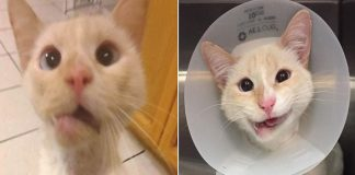 This Rescue Cat Has A Crooked Jaw But That Doesn't Stop Her From Smiling PAWS PLANET