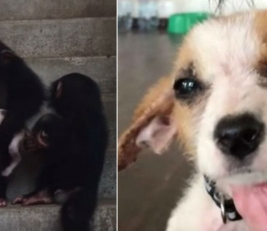 Dying Puppy Makes Amazing Recovery At Chimp Sanctuary