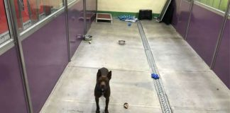 Dog Left All Alone At Shelter After Every Other Dog Is Adopted