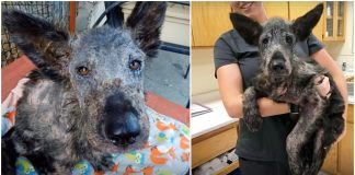 Abandoned Pup Who Lost All Hope Was Completely Transformed With 2 Weeks Of Love