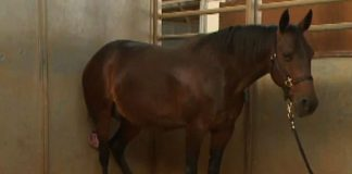 Pregnant Horse Is Ready To Give Birth - Vets Call What Comes Out A 'Miracle'