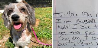 Senior Dog Left in Someone's Yard With The Most Heartbreaking Note