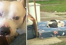 Dog Waits Patiently On Mattress After Owners Abandon Him With The Trash