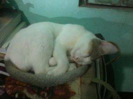 furreal friends cat