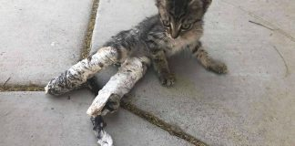 A Group Of Kids Saved Kitten Who Was Dumped On Sidewalk In Casts PAWS PLANET