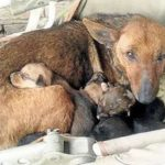Woman Finds Street Dog With Her Puppies, Looks Closer And Sees A Tiny Human Hand Reaching Up