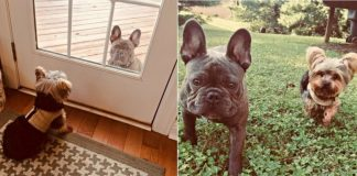 Dog Stops By Neighbor's Door Every Day To See If His Best Friend Can Play