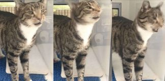 No One Wants To Adopt This Shelter Cat Because He Has The Cutest Habit PAWS PLANET
