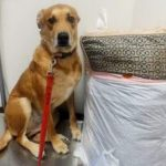 Dog Dumped at Shelter With His Bed And Toys Cause Family Didn't Have 'Enough Time' For Him