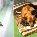 Pet Hotel Camera Captures Dog Sneaking Out Of Her Kennel To Comfort Crying Foster Puppies
