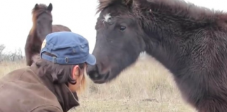 Wild Horse Offers Thanks To The Man Who Freed His Legs From Chains