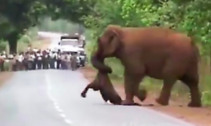 Video Shows Elephants Taking Part In Dead Calf's 'Funeral Procession'