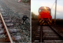 Train Conductor Stops Feet Away From Dog Chained To Railroad Tracks