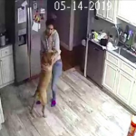 Guy Sees Footage Of What His Girlfriend Does With His Dog While He's Away On Business