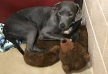 Puppy Clings To Giant Teddy Bear When Family Abandons Her Within Few Months