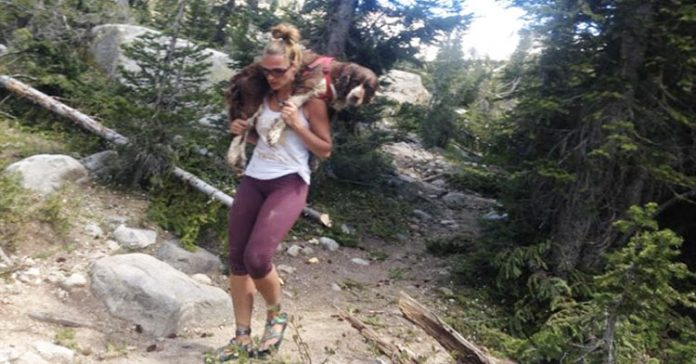Hiker Finds Injured 55-Pound Dog On Mountain And Carries Him 6 Miles To Safety
