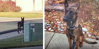 Dog Is Abandoned And Left For Dead Becomes Bomb Sniffing K9 Hero