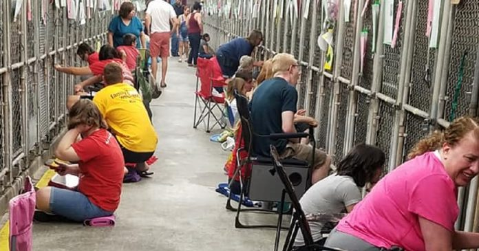 Instead of spending July 4th watching fireworks, these volunteers comfort scared shelter dogs