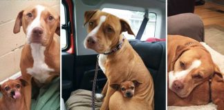 Dogs That Bonded At A Shelter Don't Leave Each Other's Side Till The Very End