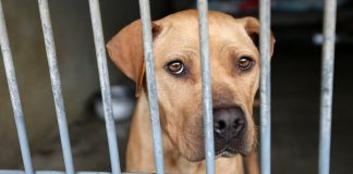 Bill introduced to make animal cruelty a nationwide felony