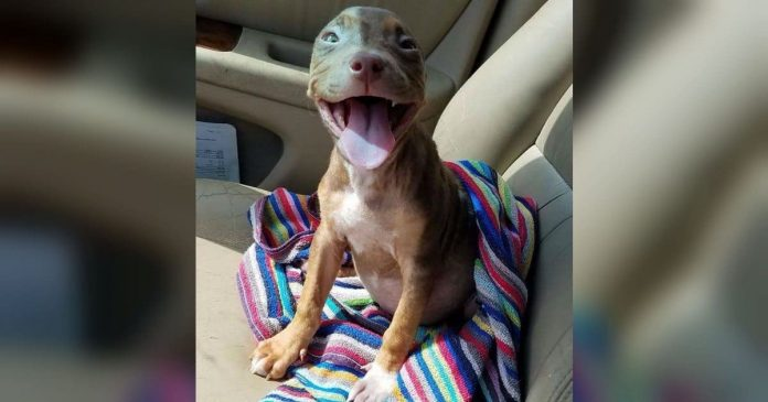 Puppy Can't Stop Wagging Tail When She Gets Out Of The Shelter