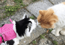 "Smitten Cat Falls In Love With ""The Girl Next Door"""