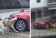"Man Got The ""Sweetest Revenge"" Of Stray Dogs After He Kicked Their Friend"