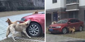 """Man Got The """"Sweetest Revenge"""" Of Stray Dogs After He Kicked Their Friend"""