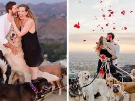 16 Adorable Dogs Help Create An Epic Surprise Proposal For NYC Couple