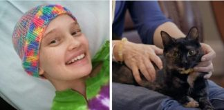 Rescue Kitten Comforts Dying Girl And Helps The Rest Of Her Family Heal