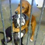Scared Shelter Puppy Hugs Her Best Friend Before They Were Put Down