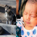 Stray Dogs Guard Baby Dumped in Bushes, Refuse to Leave Her Side Till Help Arrives