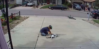 Boy Caught On Camera Playing With Neighbor's 'Misunderstood' Cat