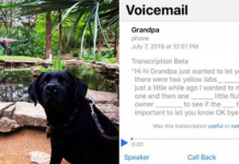 Grandpa Calls His Granddaughter To Tell Her About Every Single Dog He Sees